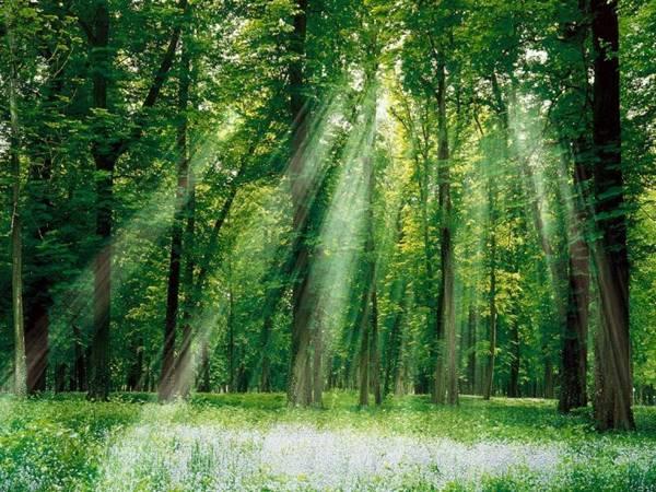 Mơ thấy rừng cây là điềm báo điều gì?
